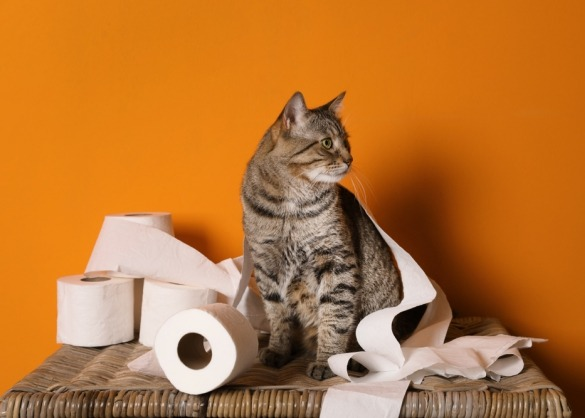 Kat met rollen wc-papier