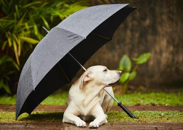 Hond schuilt onder paraplu