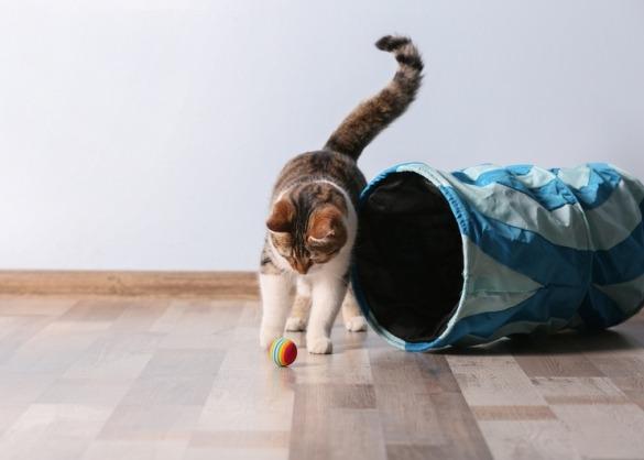 kat speelt met balletje