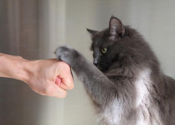 Kat geeft een vuistje