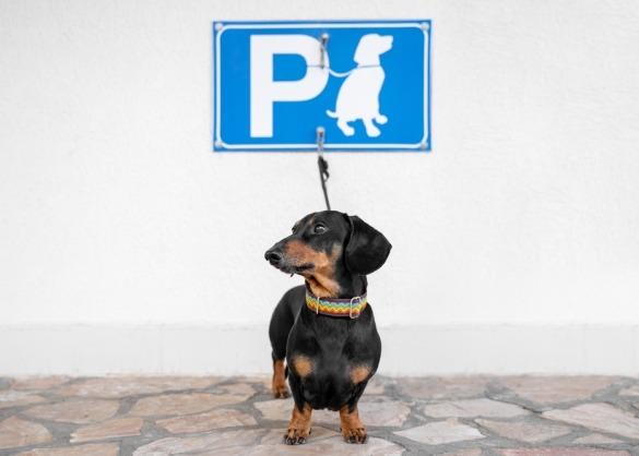 Teckel wacht op hondenparking