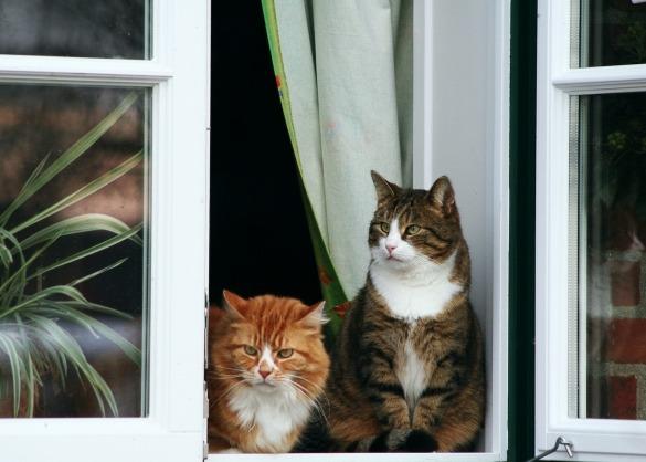 Twee katten in een open venster