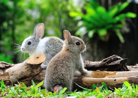 Twee konijnen op een boomstam