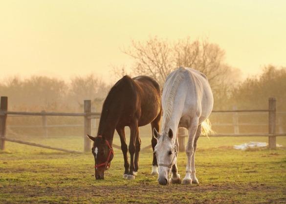 Bruin en wit paard grazen in een weide