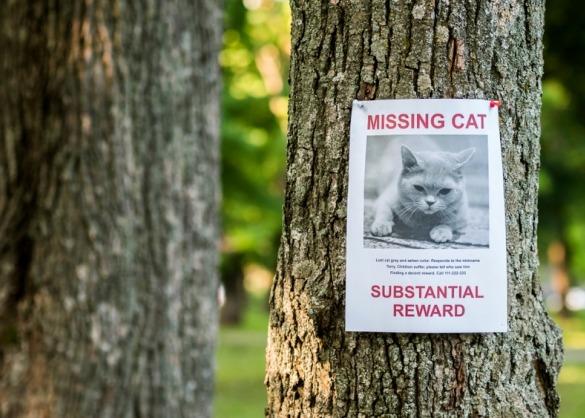 Poster van vermiste kat tegen boomstam
