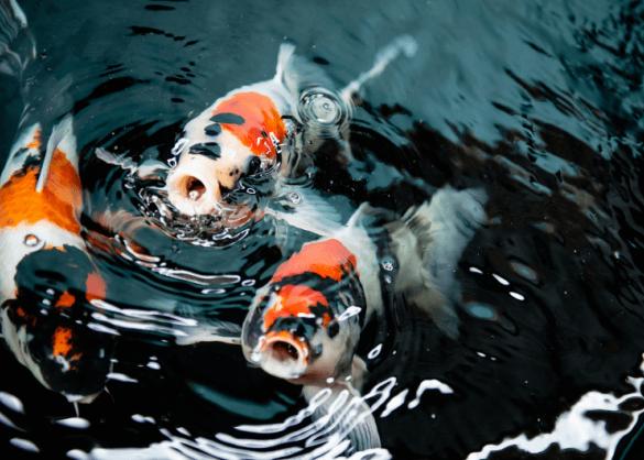 Voer voor je vissen