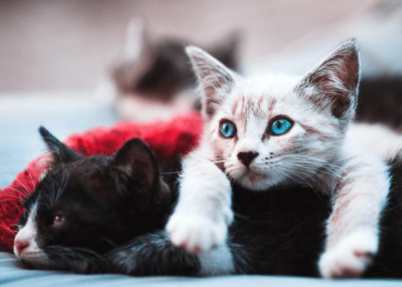 Waar moet je opletten als je een kat koopt