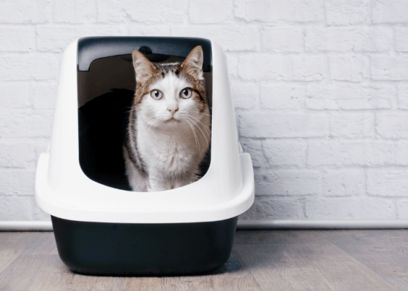 Waarom gebruikt je kat de kattenbak niet meer?