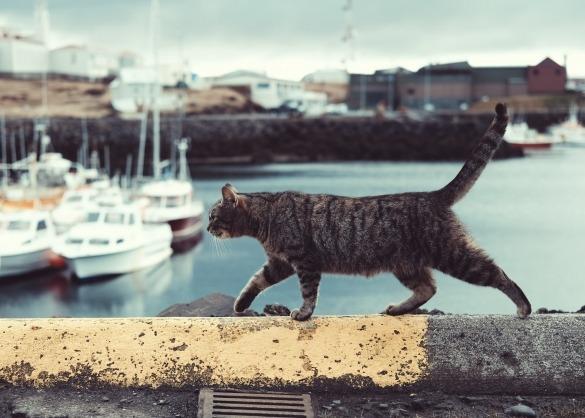Kat loopt over muurtje dichtbij water