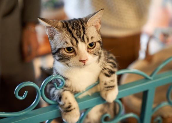 Waarom moet ik mijn kat vaccineren?