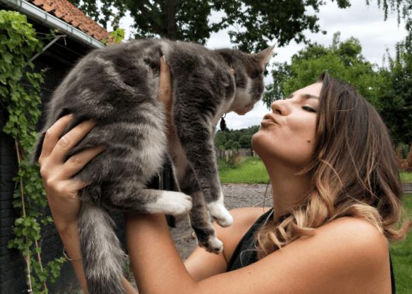 Wat je moet weten bij de aanschaf van een nieuwe kat