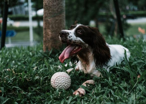Welke hondensporten bestaan er?