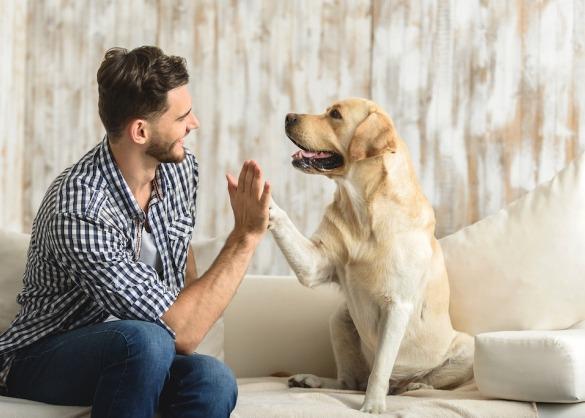 worden_honden_in_elke_cultuur_als_huisdier_gezien