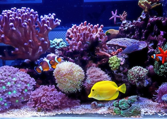 Zeewateraquarium met tropische vissen
