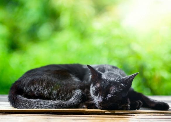 Zwarte kat slaapt in de zon