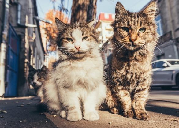 Twee zwerfkatjes op straat
