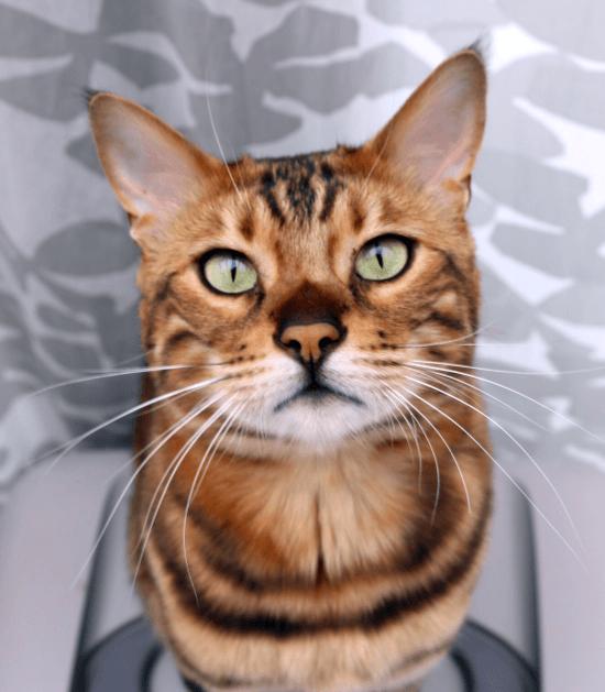 Jouw kat is de baas in huis