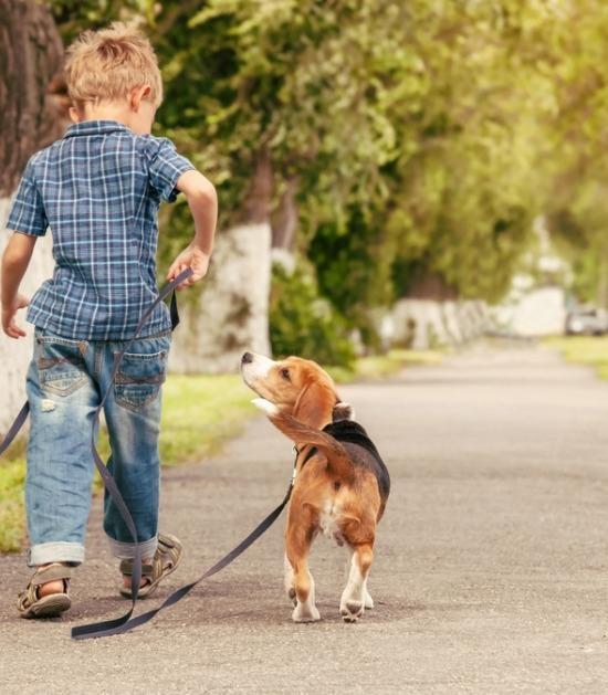 Kind wandelt met beagle