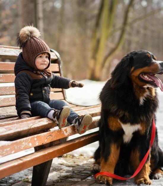 Berner Sennenhond en kind op bankje