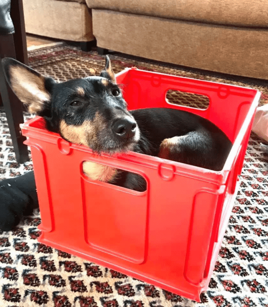 Hond ligt in curver box te slapen