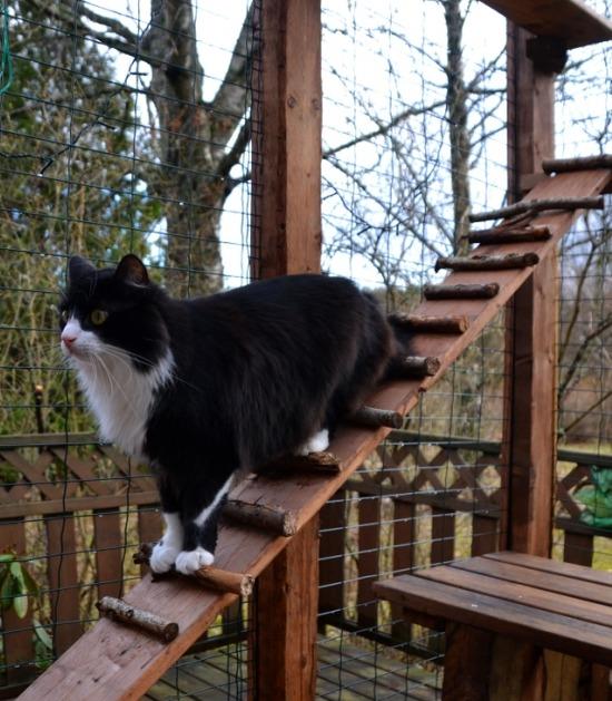 Langharige kat in catio