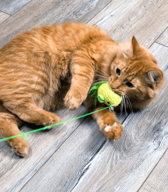 Katten houden van hengels