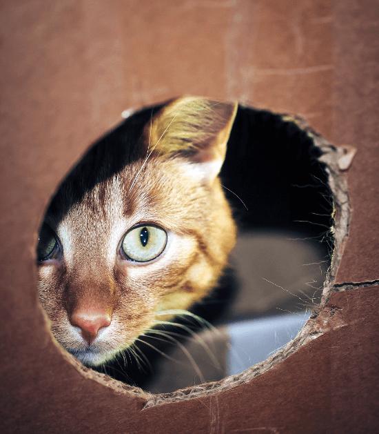 Kat in een kartonnen doos