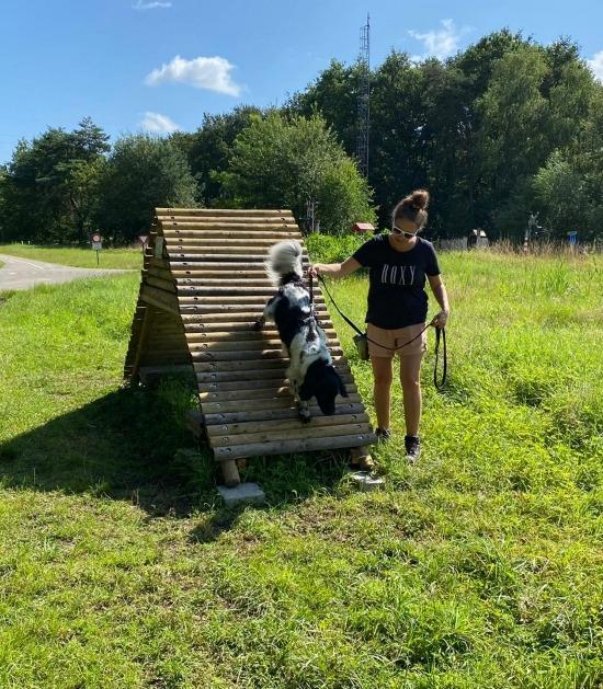 Hond over kapel of brug