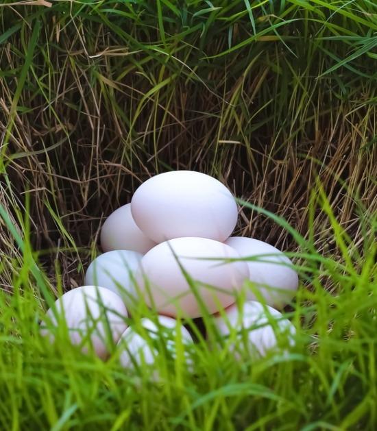 Eieren in het gras