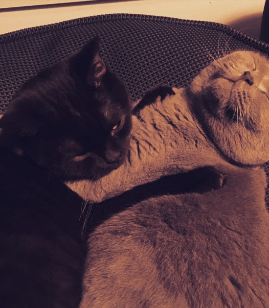 Elmo & Wifi