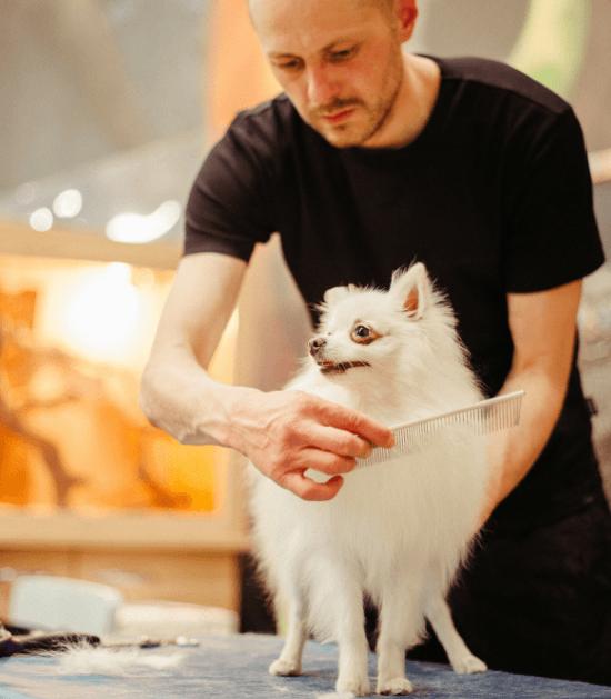 hondje bij de kapper