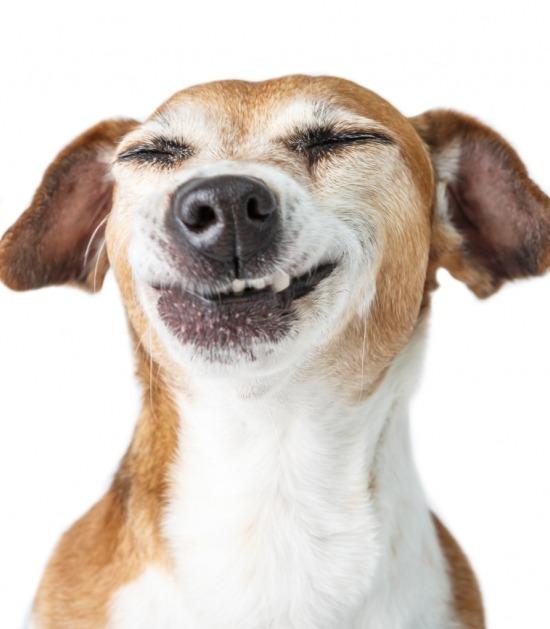 hond blij