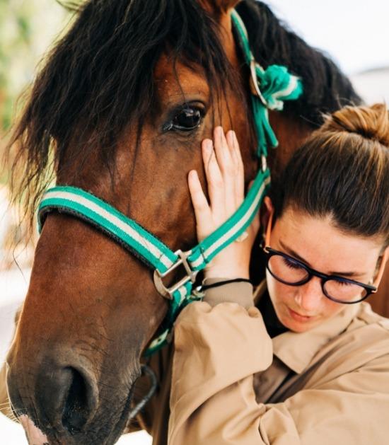 Hoofdmassage paard