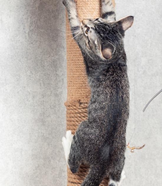 Kat hangt aan krabpaal