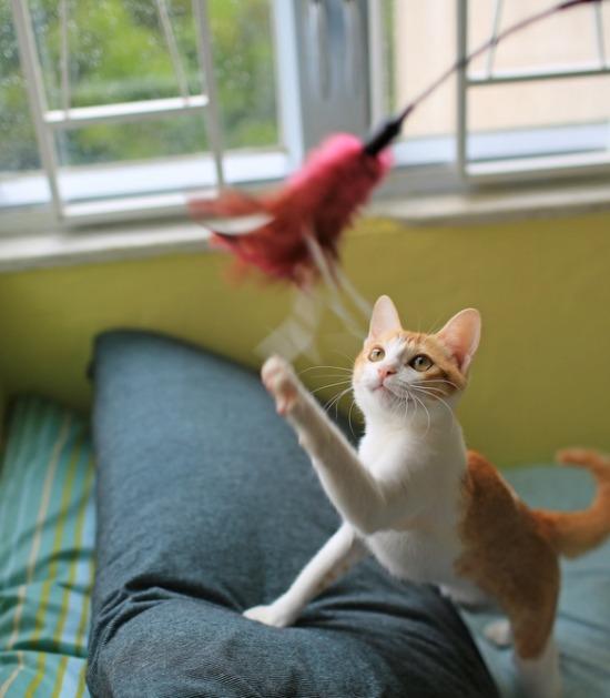 Kat speelt met hengel
