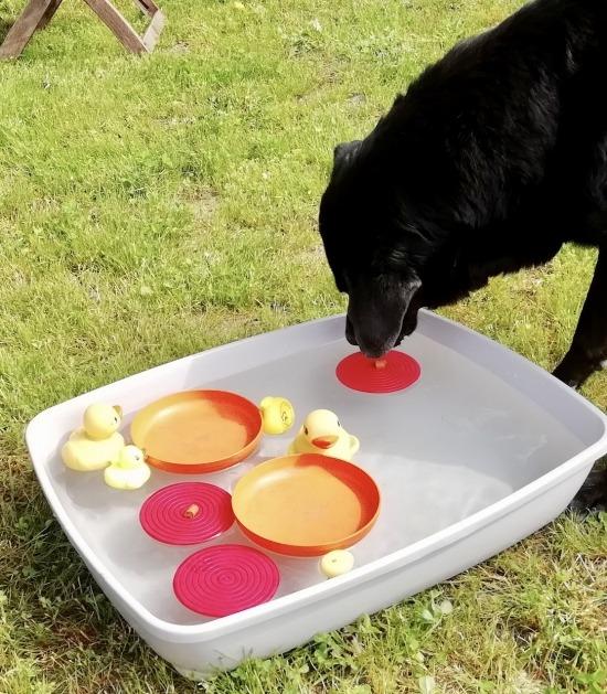 Hond vist brokjes uit bak met water
