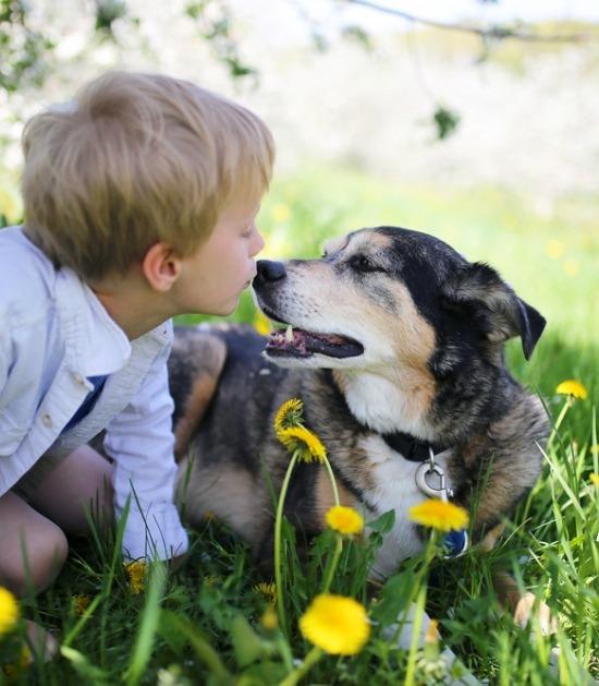 Mix hond met kind geven kushe