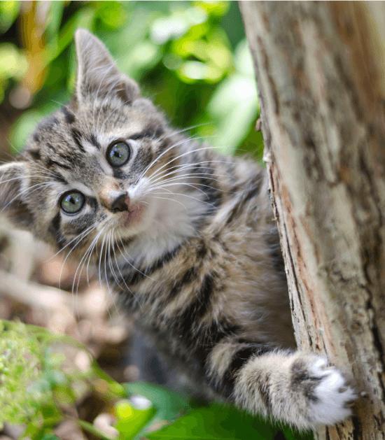 Kitten in de boom