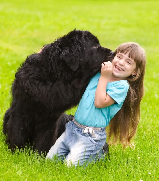 Een kindje krijgt een kus van een newfy in het gras.