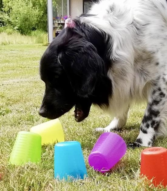 Hond duwt plastic bekers om