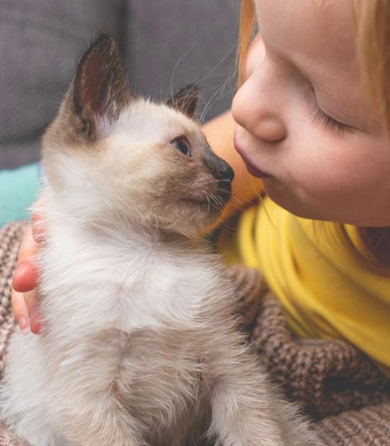 Siamese kitten wordt gekust door meisje