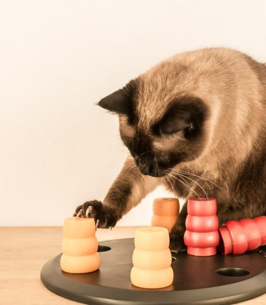 Siamese kat met voederpuzzel