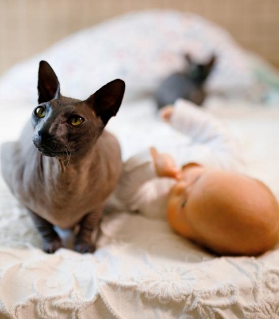 Sphynx ligt op bed met baby