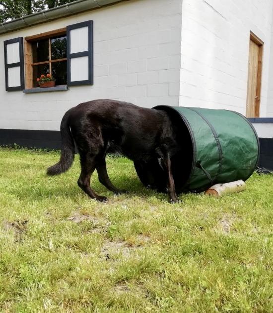 Hond met neus in tuinafvalzak