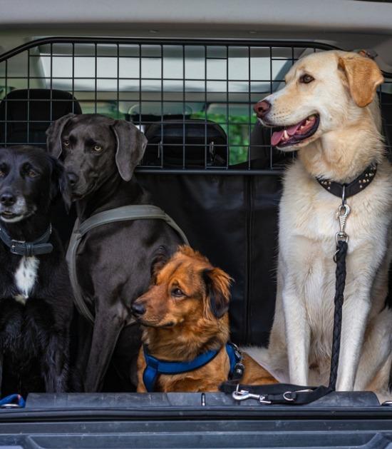 Vier honden in koffer gescheiden van cabine met tussenrek