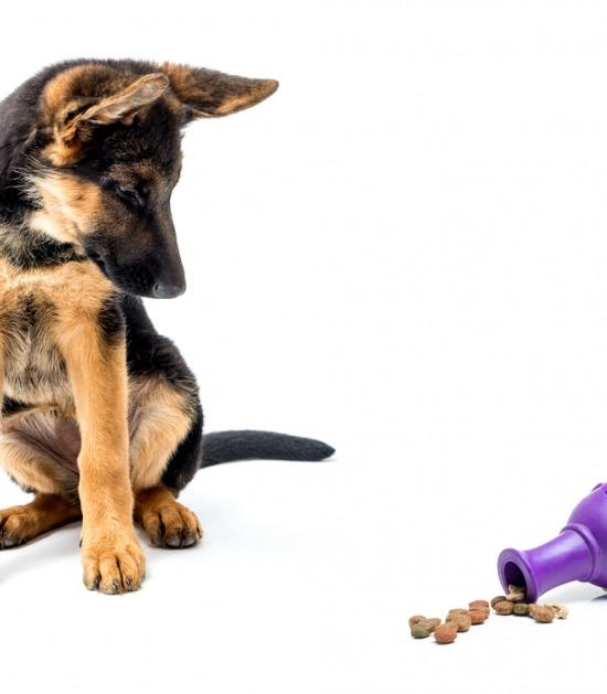 Voederspeeltje met Duitse herder pup