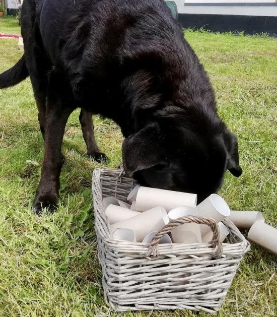Hond met neus in mandje vol lege wc-rolletjes