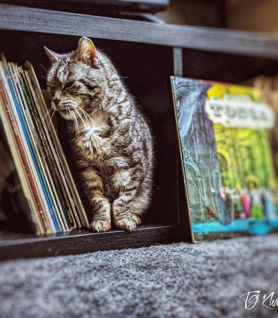 Kira in boekenkast