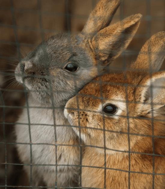 konijntjes in hun hok