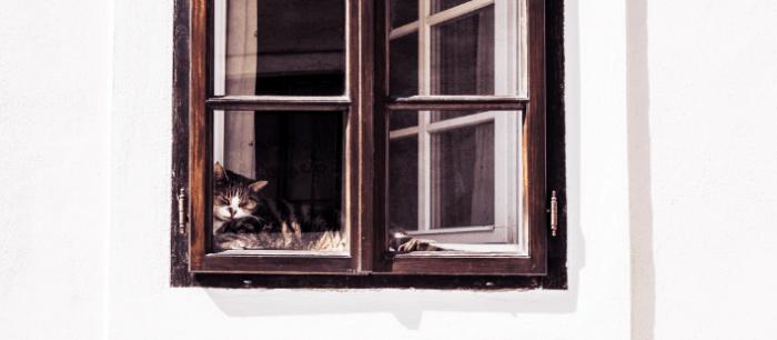 Katten liggen graag te soezen voor het raam